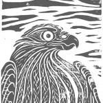 raubvogel2